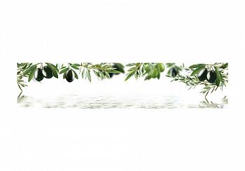 Стеновая панель с фотопечатью оливы на белом фоне